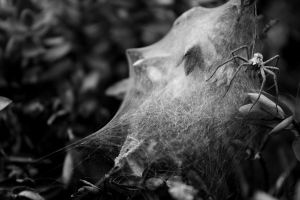 Spider Web by JesssssT
