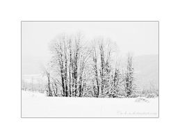 winter trees II by a-b-n