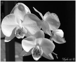 Pure black and white by Dyda81