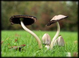 mushrooms apart together by pagan-live-style