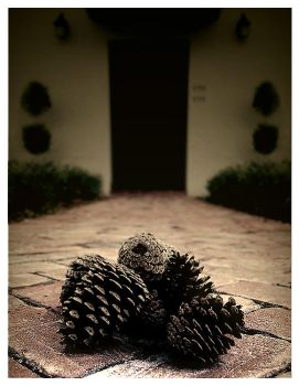 Pinecones by solllos