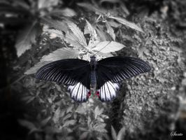 Butterfly 2 by santogc