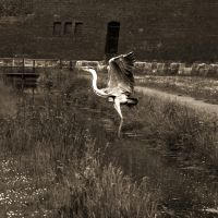 taking off by LeaHenning