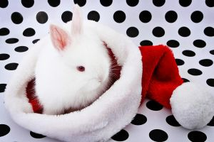 Christmas Bunny by VisualJunky