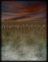 BULL RUSHES by TADBEER