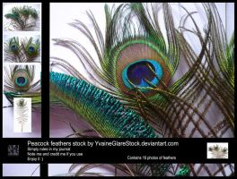 16 Peacock Feathers Stock by YvaineGlareStock