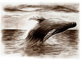 Humpback Whale by Medvezh