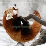 Firefox 8752P by Sooper-Deviant