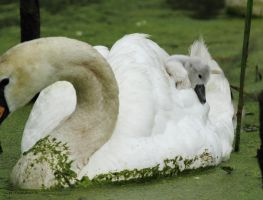 Hitching a ride by natureguy