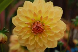 perfect litte flower by W-I-T-C-H