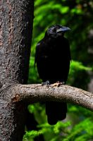The Crow by palombasso