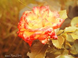Flame by kumArts