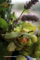 Miniature apples and lavender 2 by GeaAusten