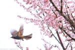 Fly from Spring to Spring by simzcom