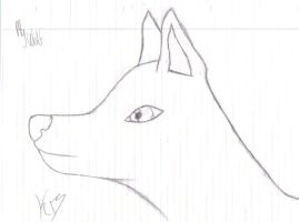 wolf drawing by JENNY8888