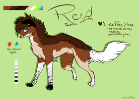Reed by FaIIyn