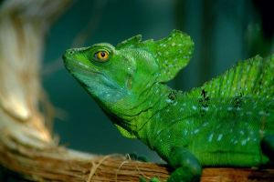 Chameleon by Tiago82
