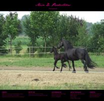 Horse Stock 014 - Friesian by MiszD