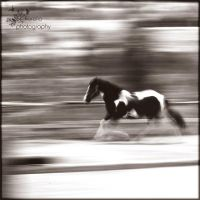 galloping... by FioReLLo