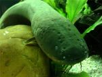Smile Mr. Electric Eel by blahfrickenda