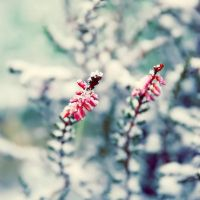 Snow I've Been Waiting for you by BlueColoursOfNature