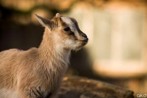 Lil Goat by Mob1