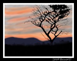 SunSet by spercar