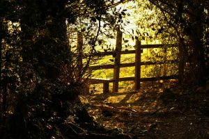 Are you going to the woods tonight by Eiande