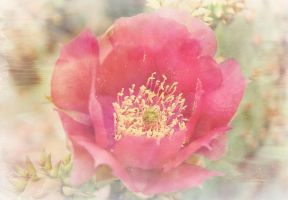 The bEaUtY In tHoRnS *Cacti Flower Stock* by Cre8aRt4LifE