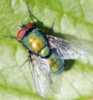 Garden Fly by khufus
