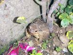 Frog in The Garden 1 by xvrcardoso