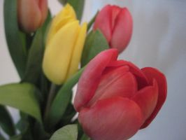 pink and yellow tulips by harry-potter-maniac