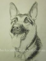 German Shepherd by BexFx13