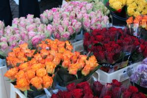 roses at market in Achen 3 by ingeline-art