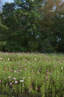 Field of Wildflowers 11 by FairieGoodMother