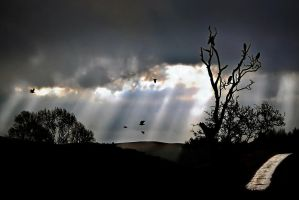 Storm + Crows + Dark Trees by Coigach