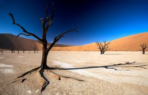 Deadvlei Namibia by Arty-eyes