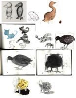 Animal Life Drawings by JimmyCartoonist
