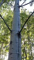 Tall tree by philippeL