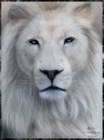 White lion by Etskuni