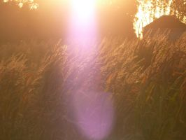 Sway In The Sunlight by The--Enchantress
