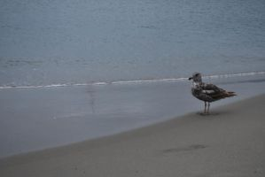 Bird at the Beach Stock by IllusionsGlade