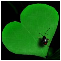 The Luv Bug by Giselle-M