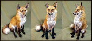 Red Fox Sitting by WeirdCityTaxidermy