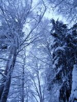Snowy Trees Stock by Kinhiae