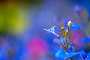 The color of flowers by MiddleStar