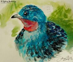 Spangled Cotinga ***Tutorial*** by SunStateGalleries