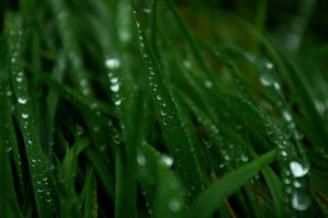 green green grass by InanimateSickBoy