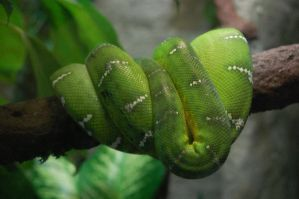 Stock 454 - Snake by pink-stock