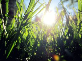 Grass in the sun by xXxArtIsTheWeaponxXx